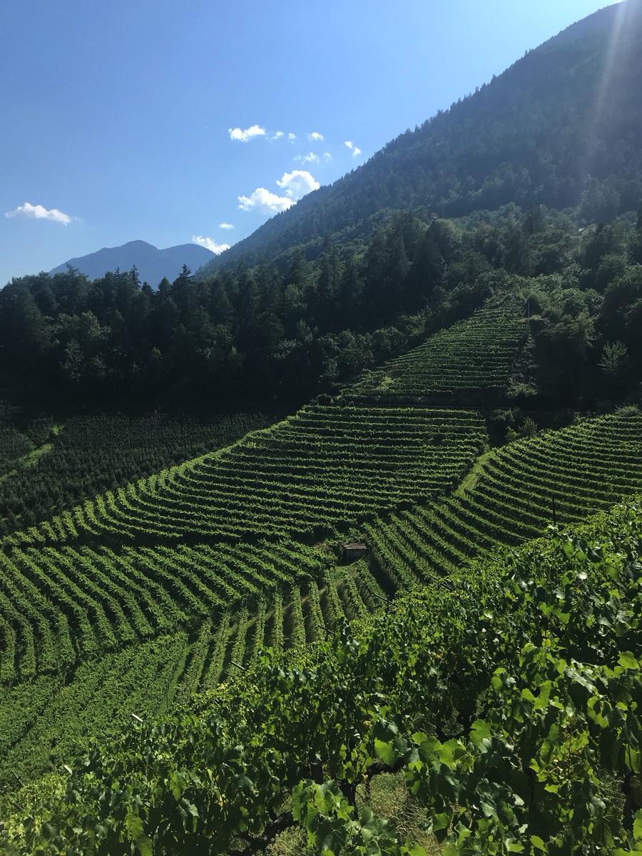 Warum badischer Wein (von der Sonne verschont) gegen Südtiroler Wein abstinkt. In einem Bild.